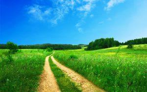 Green field UN Sustainable development goals